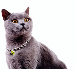 Jari - Pet Jewellery and Designer Jewellery, Pet Jewellery, Dog Collars, Cat Collars, Chiban, Tane, Diamond Collars